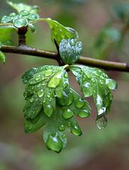 rain leaves.jpg