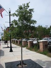 Lincolnway trees.jpg