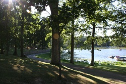 Lakewood Trees.jpg